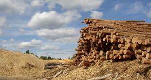 BWI biomassa centrale utrecht eneco lage weide
